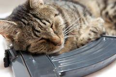 Cat sleeping on submachine gun Royalty Free Stock Images