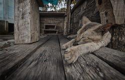 Cat Sleeping sull'plance di legno Fotografia Stock