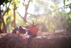A cat sleeping in the sun stock image