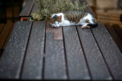 Cat sleeping on the table. Pretty cat sleeping on the wooden table. View with space for you text royalty free stock images