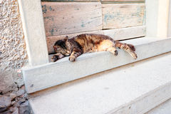 Cat sleeping at the threshold Royalty Free Stock Photography