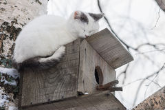 Cat sleeping on top of a birdhouse Royalty Free Stock Photography
