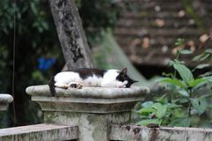 A cat sleeping on top of a wall stock image
