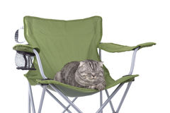 Cat sleeping on tourist armchair Royalty Free Stock Photos