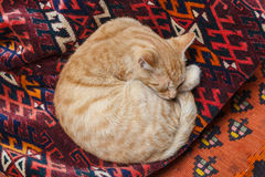 Cat sleeping on the traditional carpet exposed on the market Stock Photos