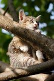 Cat sleeping Stock Photography
