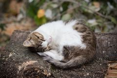 The cat is sleeping on a tree
