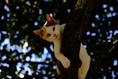 Cat sleeping on tree. Stock Photo