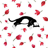 Cat sleeping on tulips. Vector illustration. Stock Photos