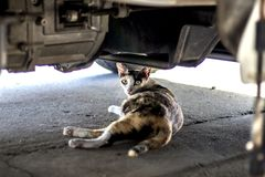 The cat is sleeping under the car royalty free stock image
