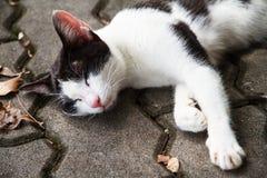 Cat sleeping. On walkway concrete Stock Photos