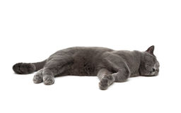 Cat is sleeping on a white background Stock Photography