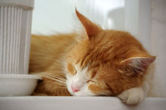 The cat is sleeping on a white windowsill. Close up Stock Image