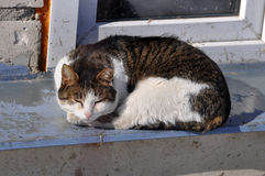 Cat sleeping on window Royalty Free Stock Photos