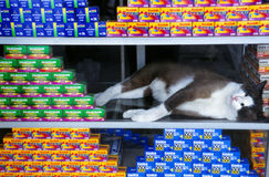 A cat sleeping in a window display Royalty Free Stock Photography