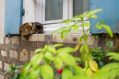 Cat sleeping on a window sill Royalty Free Stock Photo
