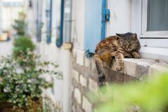 Cat sleeping on a window sill Royalty Free Stock Photography