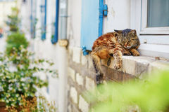 Cat sleeping on a window sill Royalty Free Stock Photos