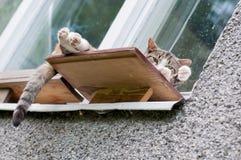 Cat sleeping on the windowsill outside royalty free stock image