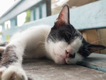 Cat sleeping on a wooden bench Royalty Free Stock Photography
