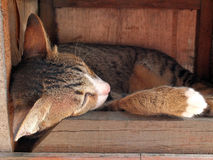 Cat sleeping in wooden box Stock Photography