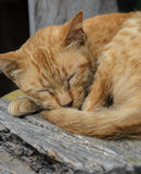 Cat sleeping on a wooden chair. Brown cat sleeping on a wooden chair Stock Photo