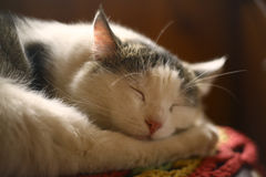 Cat sleeping on wooden chair in country house interiour Royalty Free Stock Photos