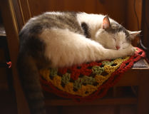 Cat sleeping on wooden chair in country house interiour Royalty Free Stock Images