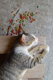 Cat sleeping on wooden rack with colorful cat food scattered on the ground Royalty Free Stock Photography