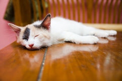 Cat Sleeping on Wooden Table. Close-Up view of a cat sleeping on table Royalty Free Stock Image