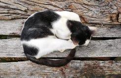 Cat Sleeps Fotografia Stock