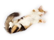 The cat sleeps Royalty Free Stock Images