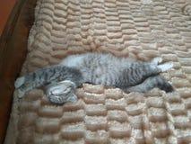 Cat Sleeps Foto de archivo libre de regalías