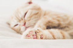 Cat Sleeps Royalty-vrije Stock Foto