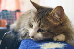 The cat sleeps on the back of the couch stock photography