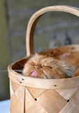 Cat sleeps in the basket Stock Photos