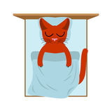 Cat sleeps in bed. Pillow and blanket. Sleeping kitten Royalty Free Stock Photos