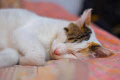 Cat sleeps on the bed Stock Photo