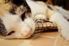 Cat sleeps on cement at the park Stock Photography