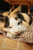 Cat sleeps on cement at the park Stock Photos