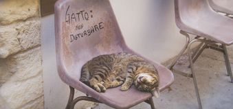 Cat sleeps on a chair outdoors, by day Royalty Free Stock Images
