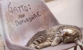 Cat sleeps on a chair outdoors, by day Stock Photos