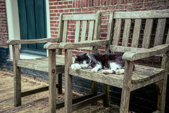 Cat sleeps on an chair. Spotted cat sleeps on an old chair near the House Royalty Free Stock Image
