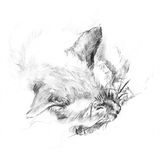 Cat sleeps charcoal artistic illustration. Charcoal artistic illustration of a beautiful sleeping Siamese cat stock illustration