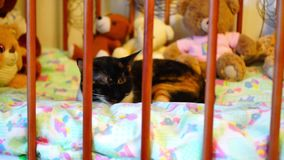 Cat sleeps in crib stock footage