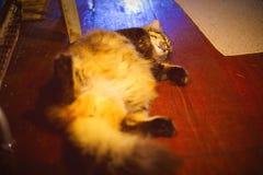 The Cat Sleeps After Dinner stock photos