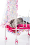 Cat sleeps in doll bed Stock Images