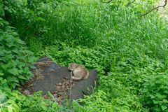 Cat sleeps in the green bushes royalty free stock image