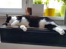 The cat is asleep. The cat sleeps on the heater, the cat is hot on the stove royalty free stock photography