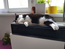 The cat is asleep. The cat sleeps on the heater, the cat is hot on the stove stock photos